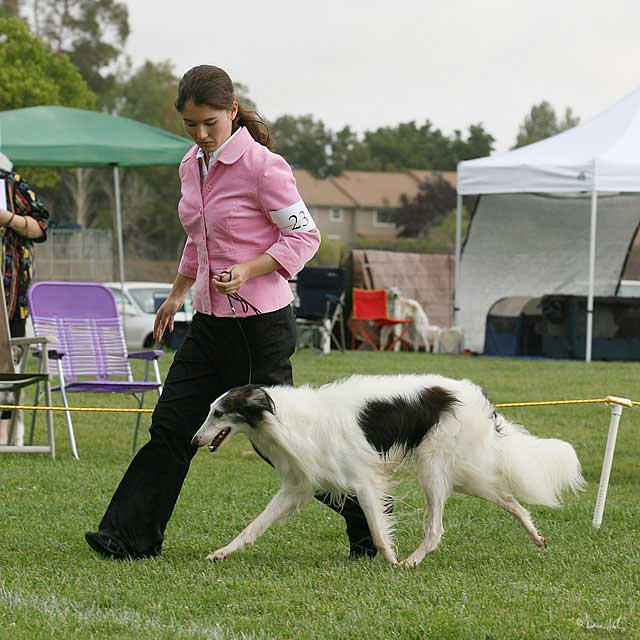 Dusty at Boofest Silken Windhound