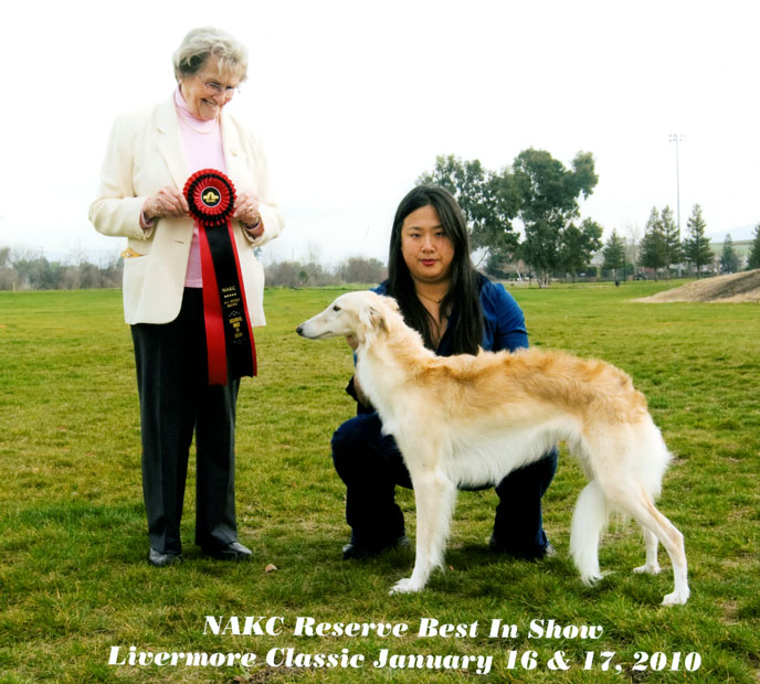Ilsa the Silken Windhound Best in Show