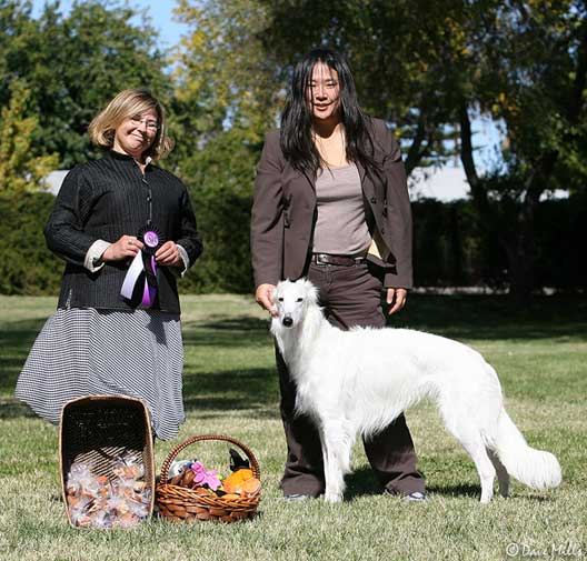 Ronan Silken Windhound with Cyndi Dell of Morgandell Borzoi